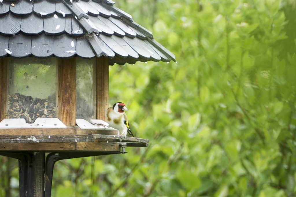 (Bird perched at a feeder) Bird watching as a hobby is low-cost and accessible. Learn how to attract birds of all kinds—you'll enjoy their company and unique personalities!