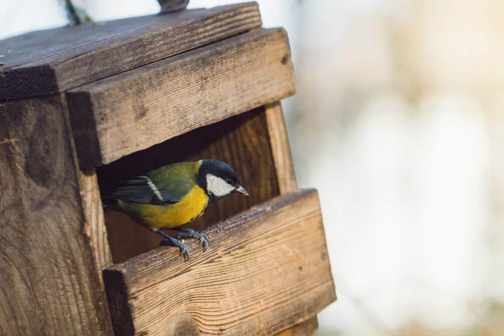 (Bird peeking out of a bird house) Bird watching as a hobby is low-cost and accessible. Learn how to attract birds of all kinds—you'll enjoy their company and unique personalities!
