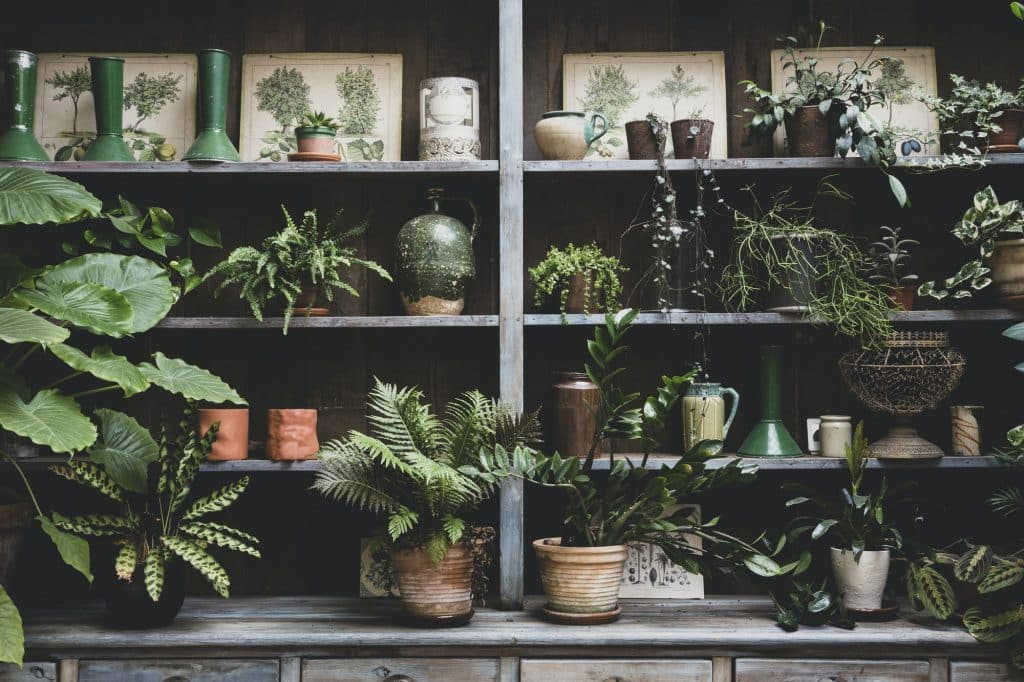 Want to start a garden but don't have the time to manage lots of outdoor plants? Check out our resources and info on indoor gardening supplies! (Image: Selection of indoor plants in terracotta pots on wooden shelves.)