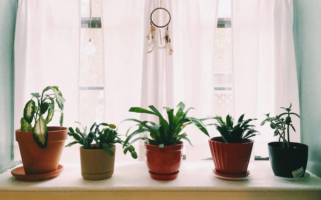 Windowsill accessories