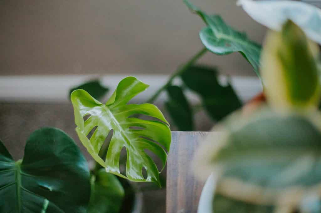 Spruce up your home with house plants! Interior design can make for a relaxing hobby and an organized space. Here's how interior design affects mental health.